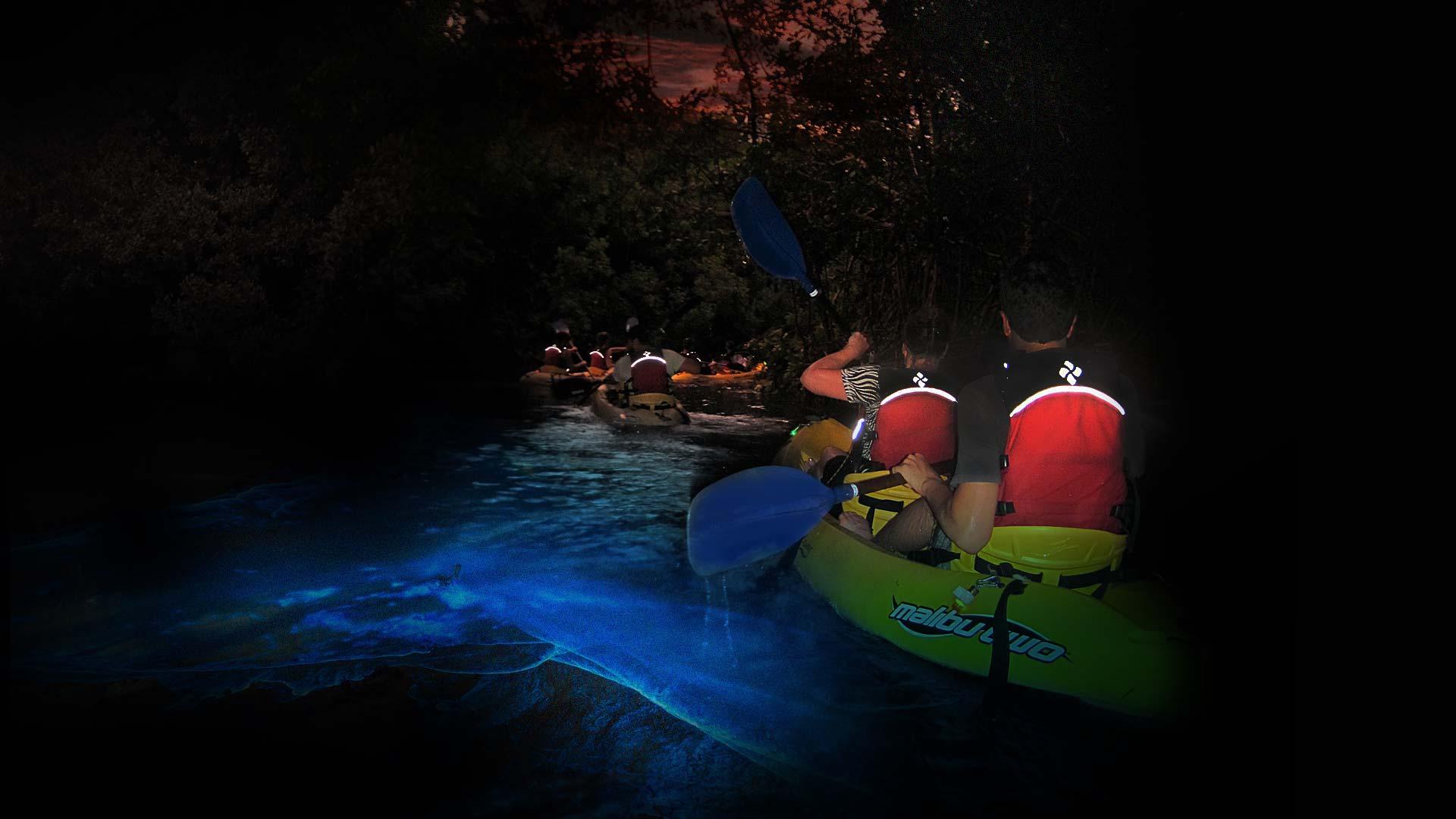 Kayakers entering the mangrove channel of the Fajardo Bio Bay Bioluminescent Bay Puerto Rico, with Kayaking Puerto Rico Bioluminescence Kayak Tour